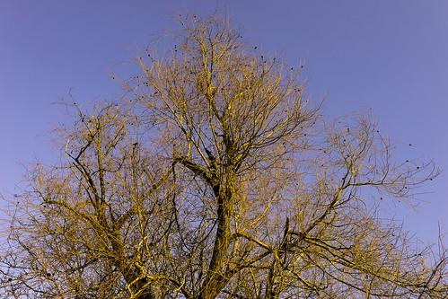 Lumière d'hiver dans les arbres à Habsheim (Haut-Rhin)