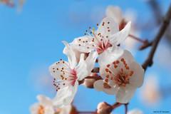 Fleurs de printemps