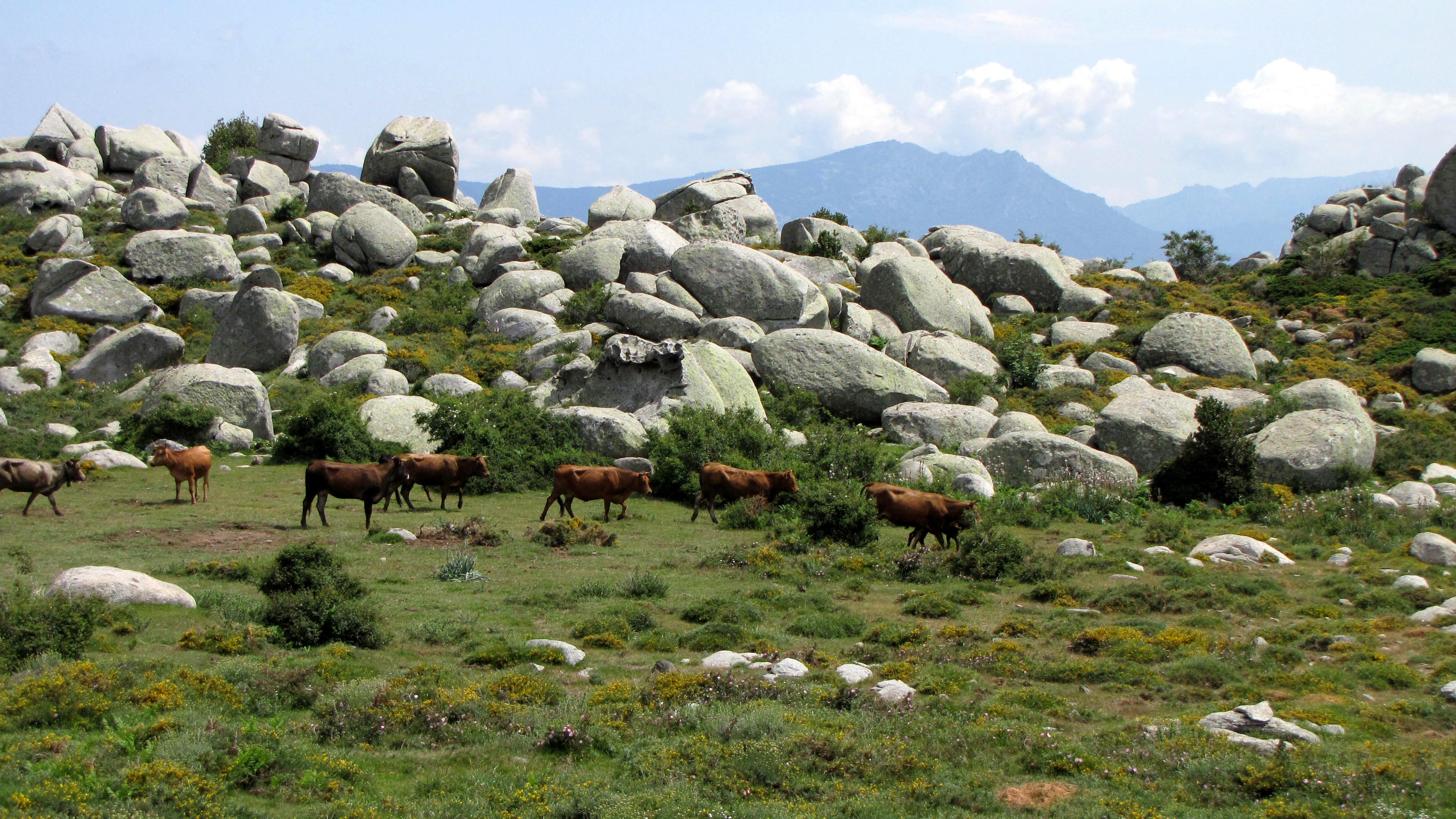 Plateau de Cuscione