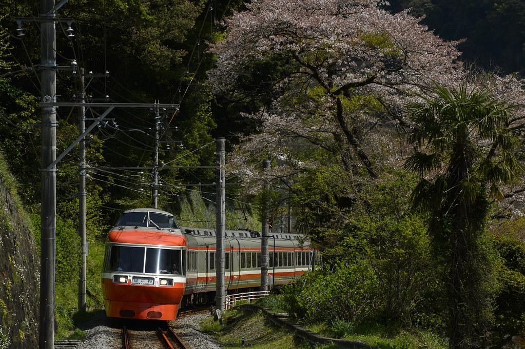 桜とLSE