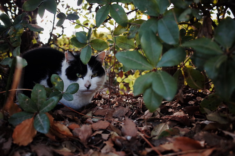 茂みに潜む