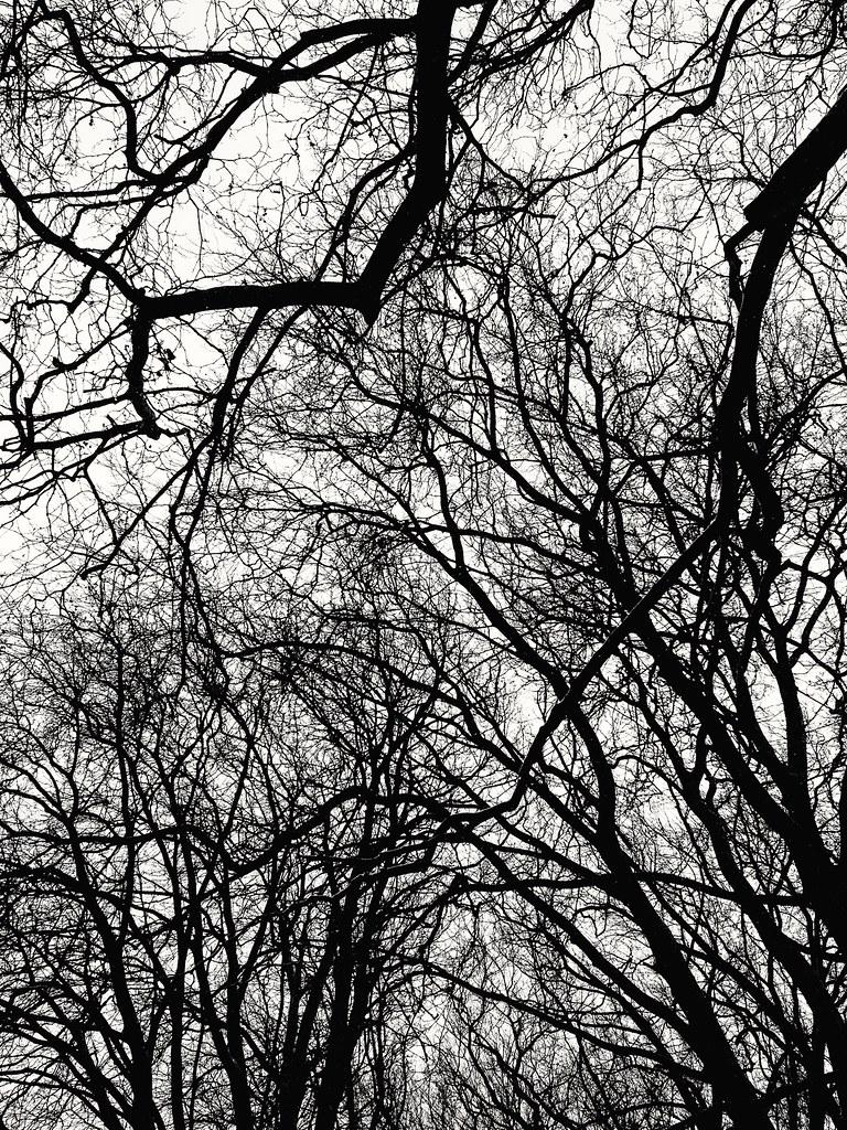 Me encantan las ramas de los árboles