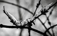 La tête dans les buissons