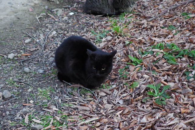 Today's Cat@2018-02-16