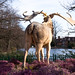 Early spring, late Pleistocene   Irish Elk   Crystal Palace Park   Feb 2018-1