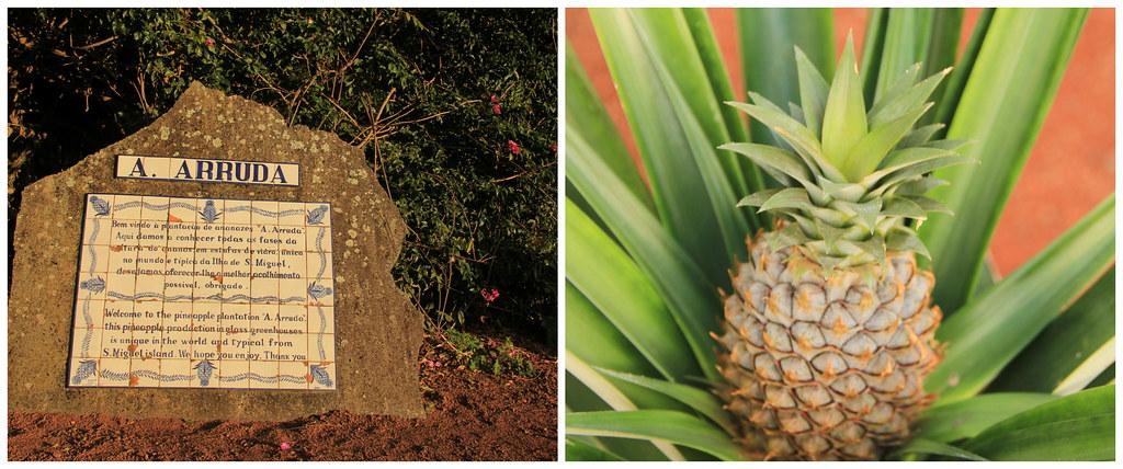 A. Arruda Pineapple Plantation, São Miguel