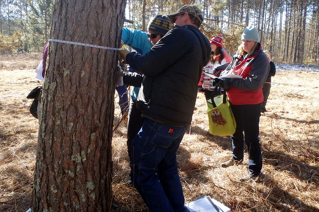students in winter coats and hats measuring the circumference of a tree