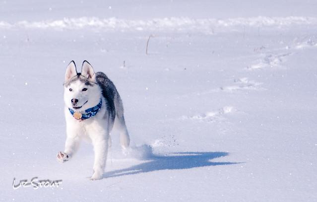 20180117 Snow Dogs_78