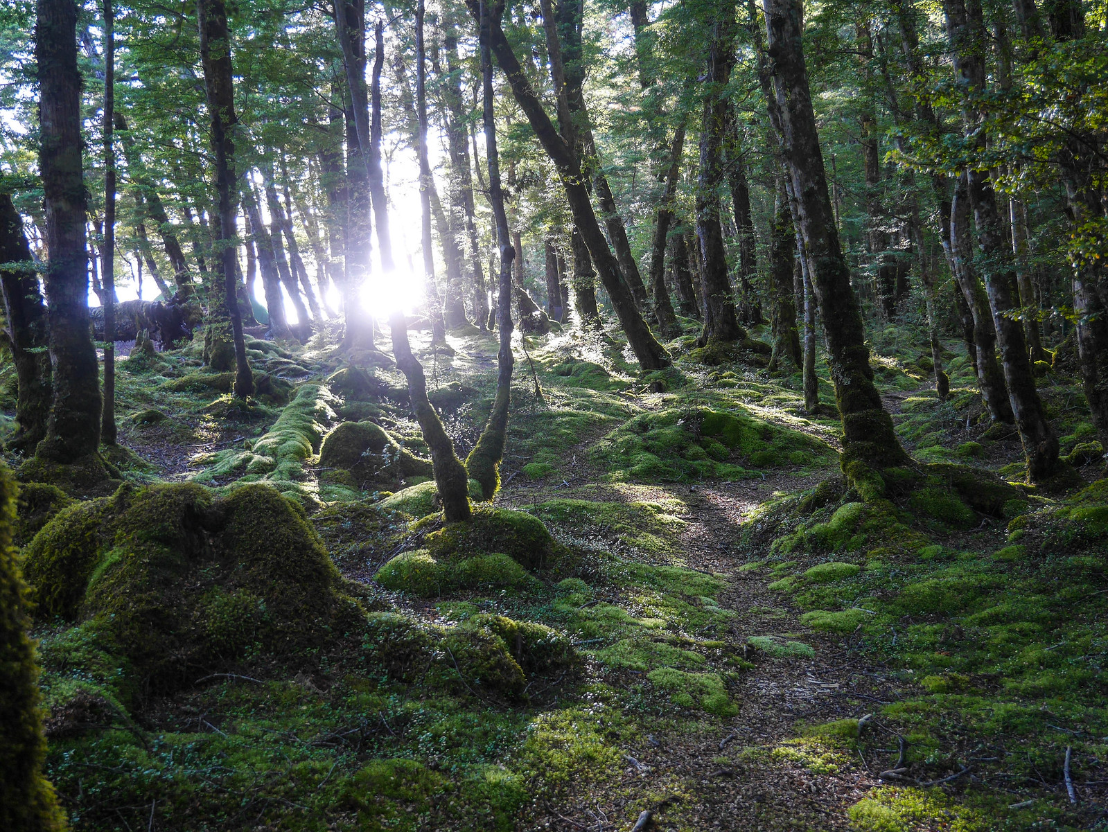 Morning in the mossy forest