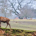 Bradgate Country Park 18th February 2018