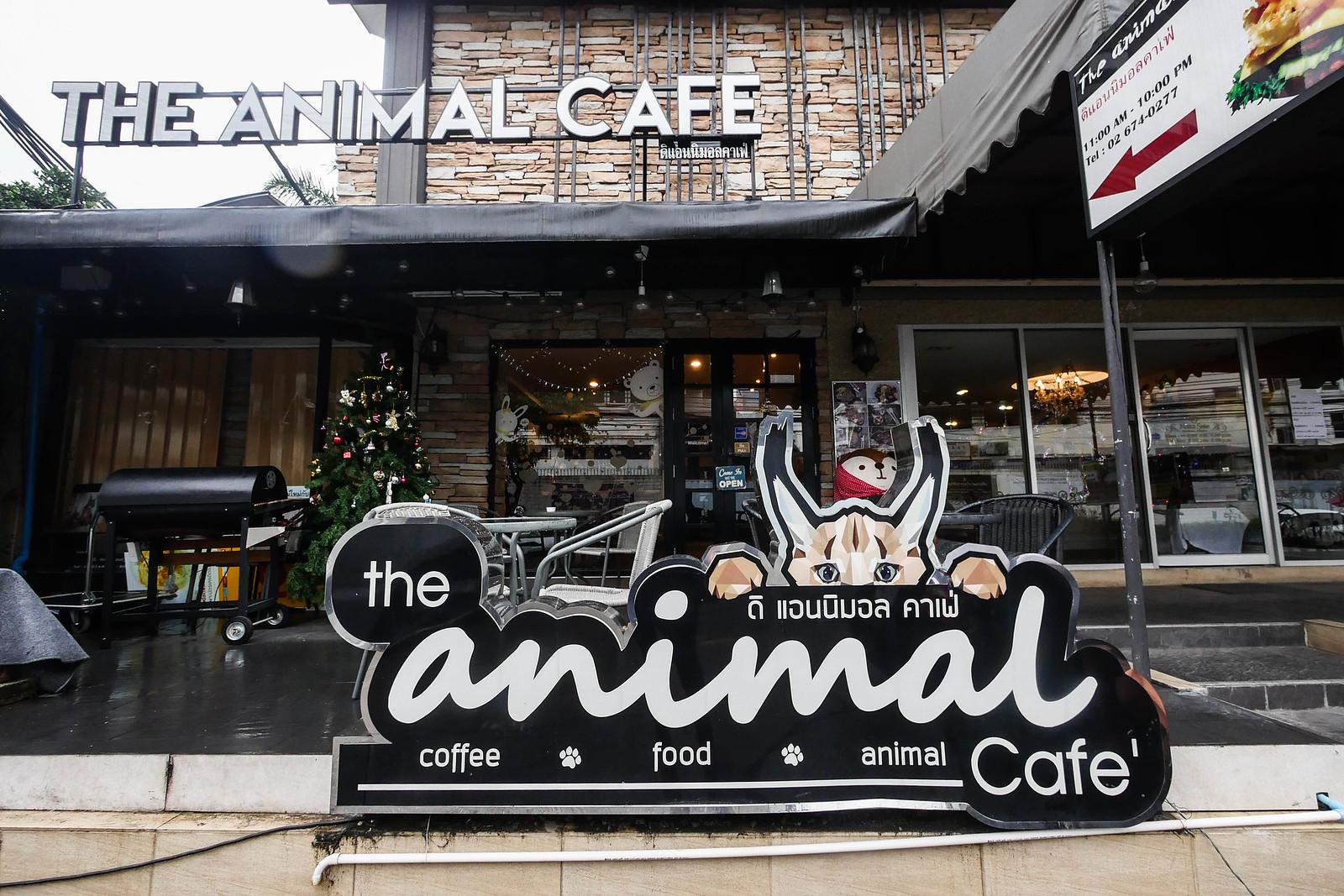 动物咖啡厅-5