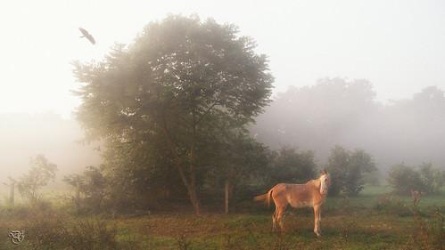 horse fog bird earlymorning kolkata foggy morning maidan nikon d750 24120mm photoshop