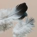 Suave como plumas by Cristina Ovede