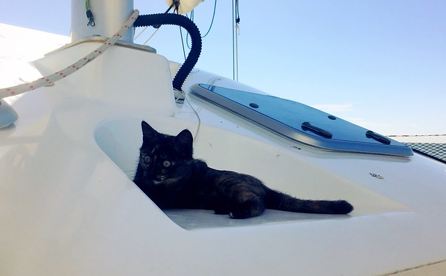 Boatcat. At sea.