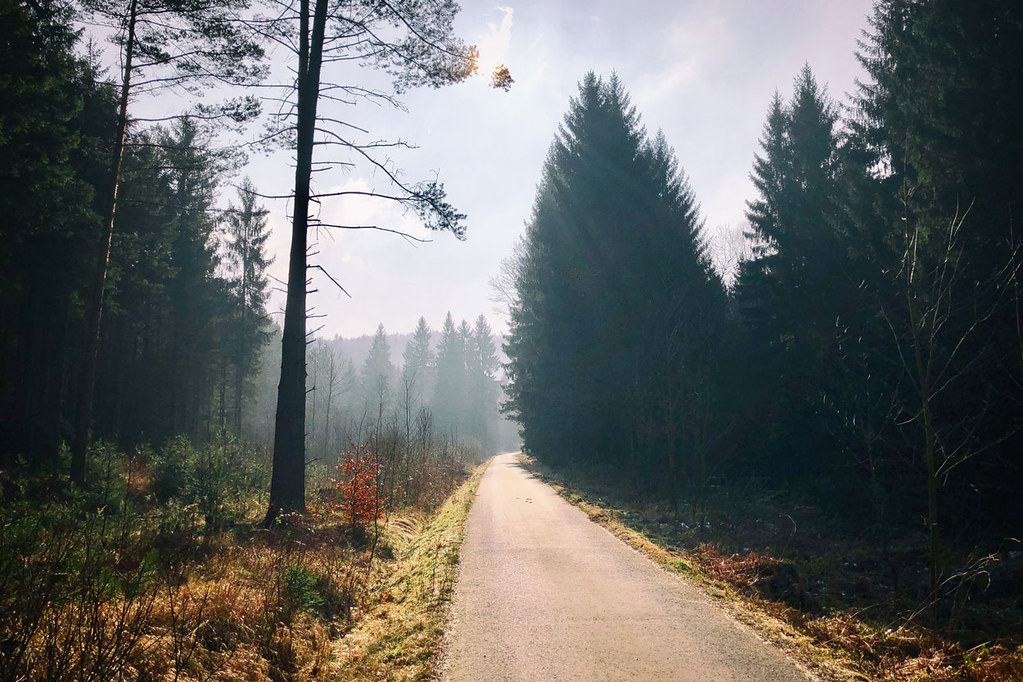 Auf stillen Pfaden im Cunnersdorfer Forst