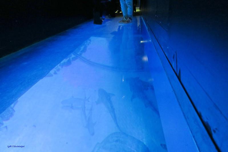 SEALIFELondon Aquarium-KLOOK客路-17docintaipei (4)