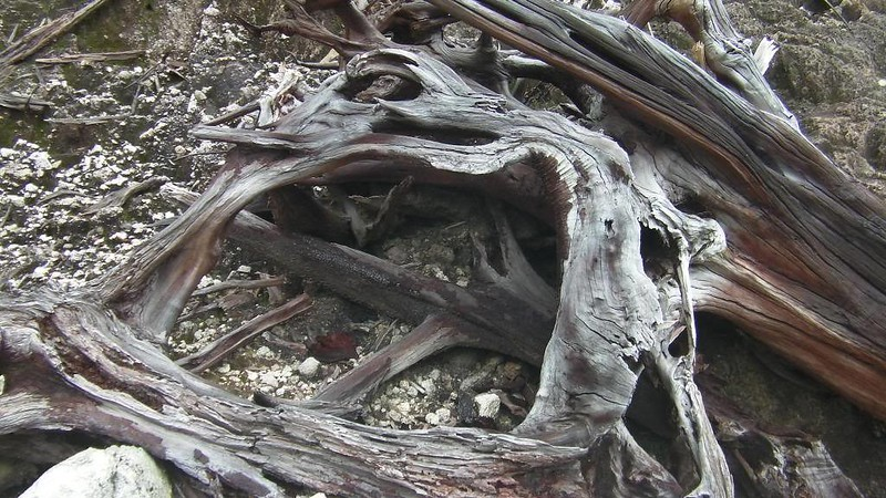 rotten trees