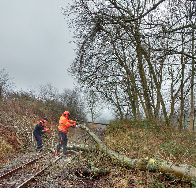 Cutting Up Fallen Trees Near Golfa Summit