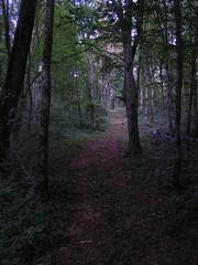 20070903 13088 0710 Jakobus Wald Weg