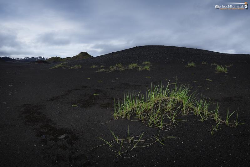 Green in the Lava fields