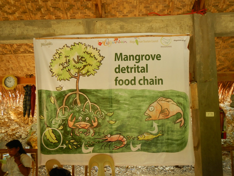 importance_of_mangroves