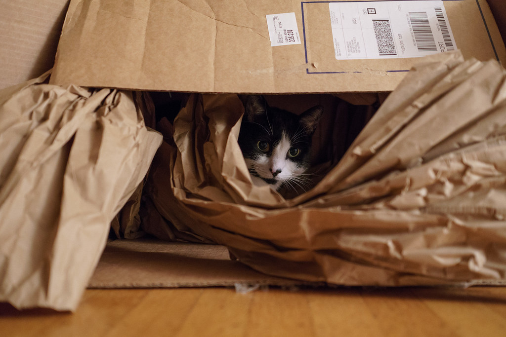 Our cat Boo sits inside a large box, nearly obscured by the packing paper spilling out of the front