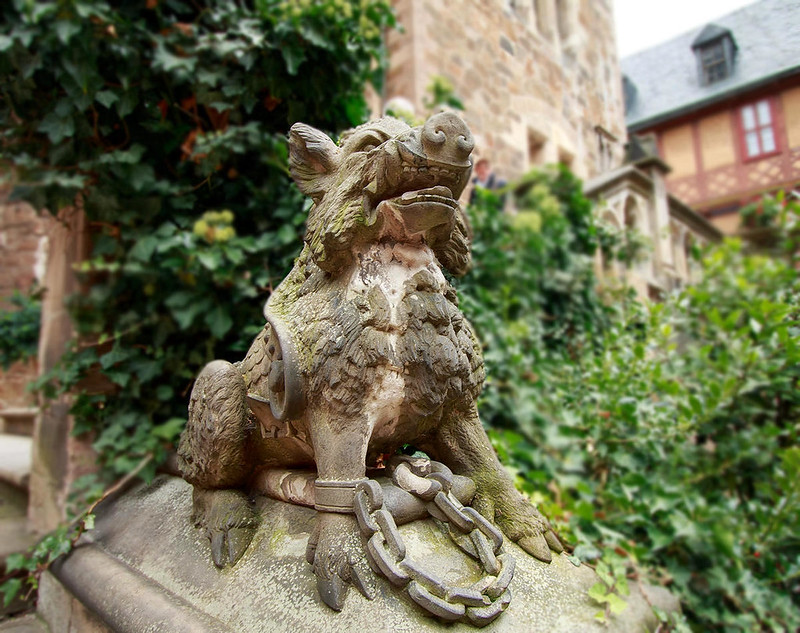 Wild boar in Wernigerode Castle courtyard. Credit Mundus Gregorius, flickr