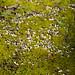 Fungi amid moss, West Park