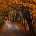Autumn in Cumbria by Phiggys