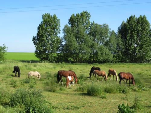 20170601 05 041 Regia Bäume Wiese Pferde