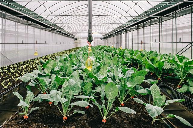 【南投埔里一日遊】景點精選一日行程! 道地美食DIY~可麗開心農場體驗趣