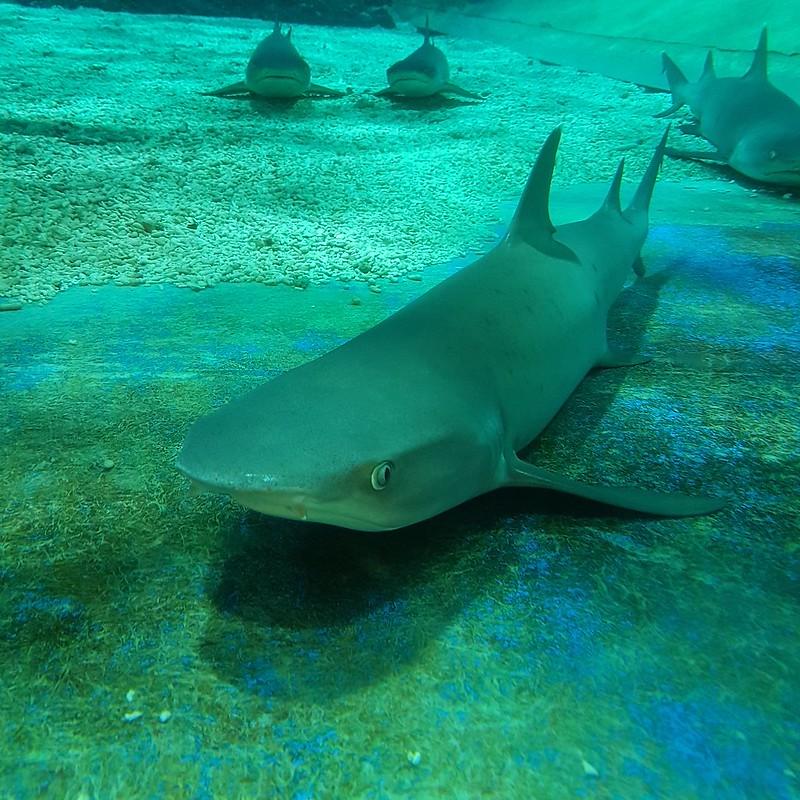 Manila Ocean Park - Sharks