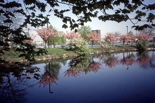 Charles River Esplanade - Kodachrome