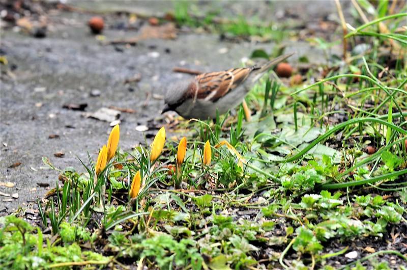 Sparrows 12.02 (2)