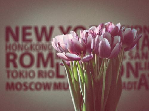 044 Tulips again