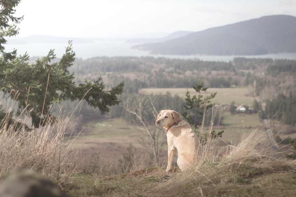 Summit dogs on Guemes Mountain