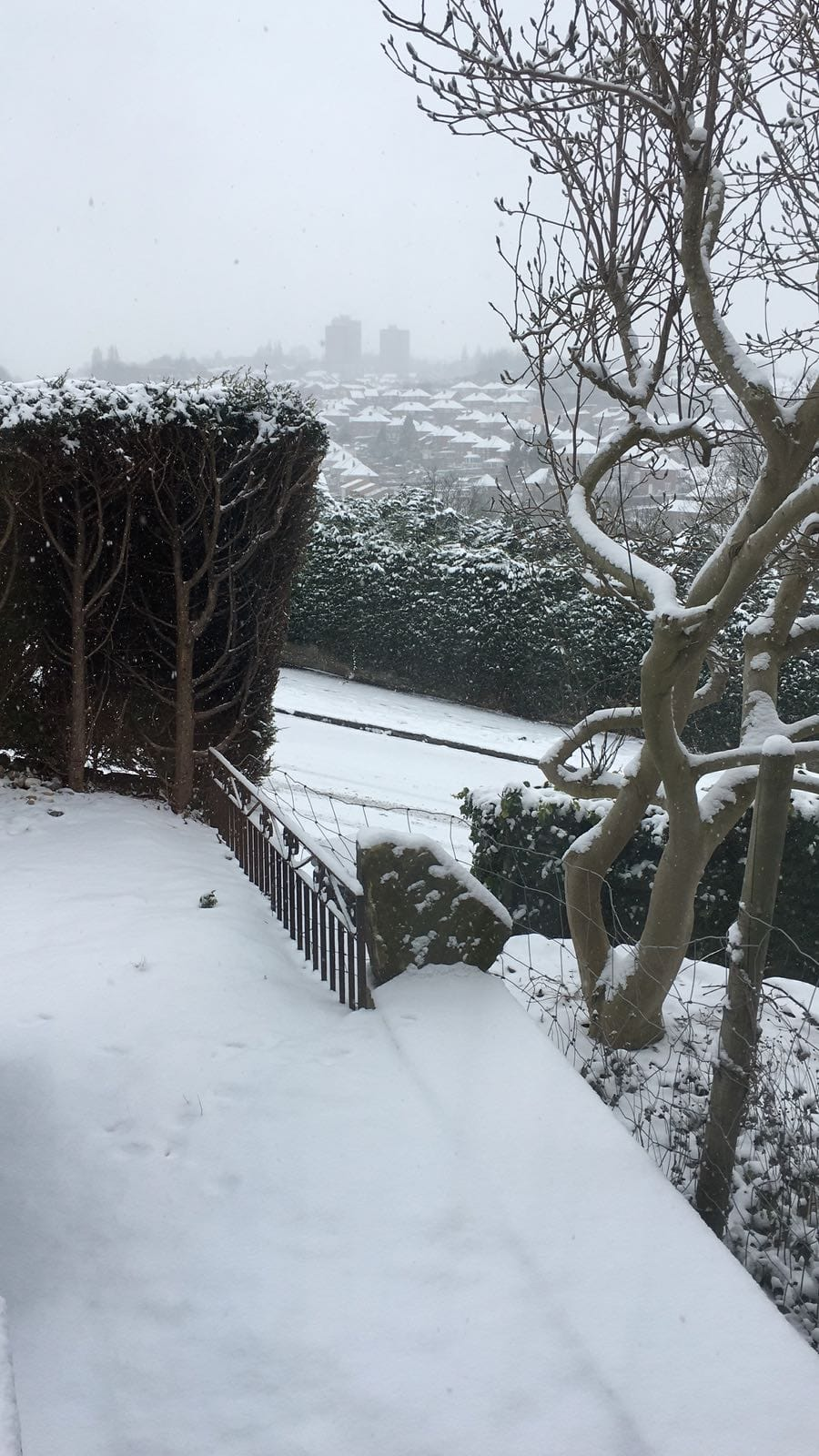 sheff snow