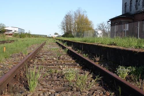 Gras wächst im Gleis 1 in Dingelstädt