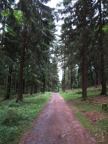 20170605 07 142 Regia Wald Weg