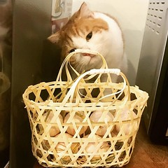 Bug checking out the basket of eggs I got from the shop yesterday.