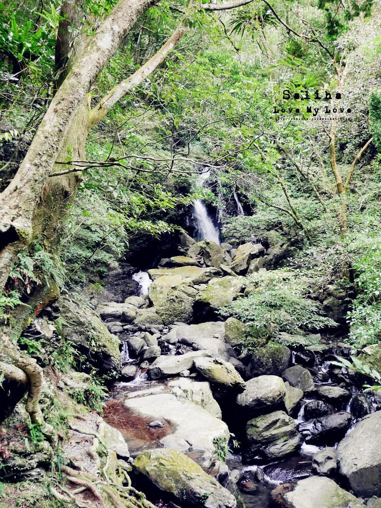 新北三峽一日遊踏青景點推薦滿月圓森林遊樂區 (41)
