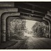 Underpass, Crab & Winkle line, Whitstable by Aliy