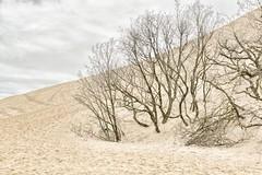Le dune de pilat