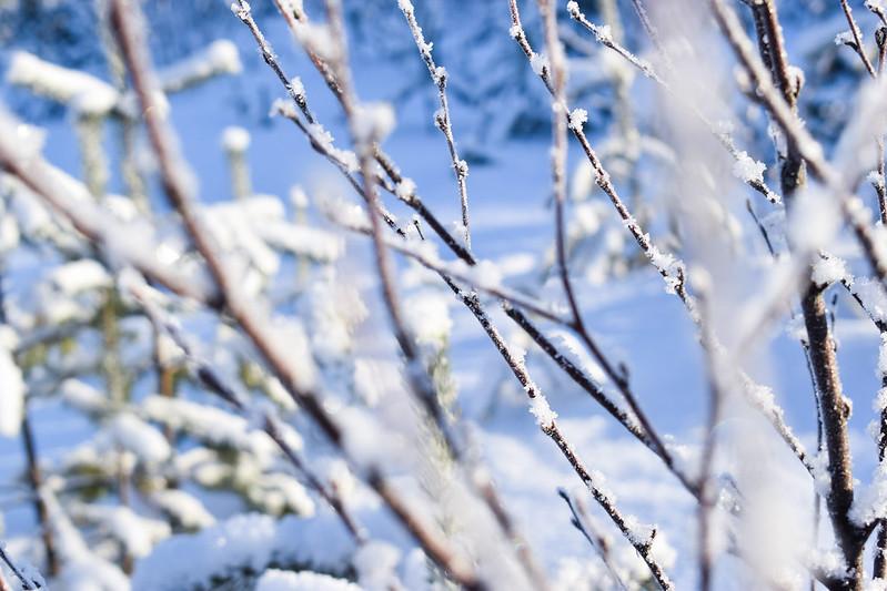 suomen luonto talvella4