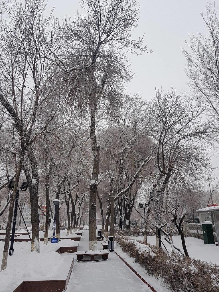 Happy New Year from Urumqi