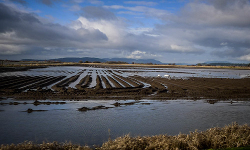 Skagit Valley Flooded Fields-008
