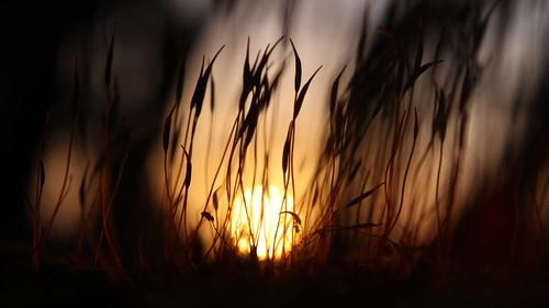 sunrise dawn moss closeup nature ireland morning light sun macro