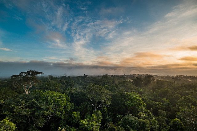Bolivian Amazon on road to deforestation