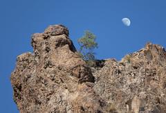 Rock Tree Moon