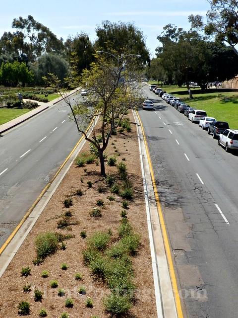 planted median